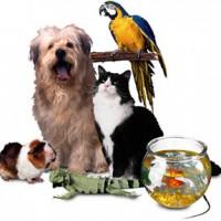 Husdjur – Bör man tillåta husdjur eller inte