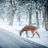 Vintern – En tid med speciella utmaningar